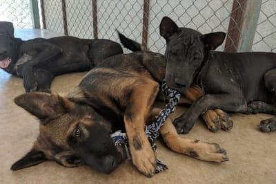 Joe and Som saved hundreds of strays