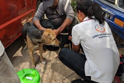 Hope for Strays treats stray dogs