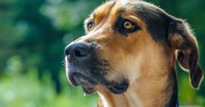 brown mixed breed dog