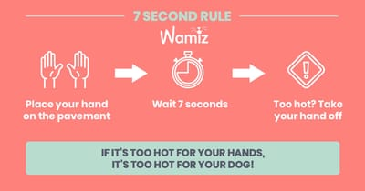 rule for heat pavement for dogs