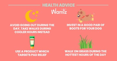 Tips to protect your dog against the heat