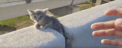 Un gatito atrapado en la carretera