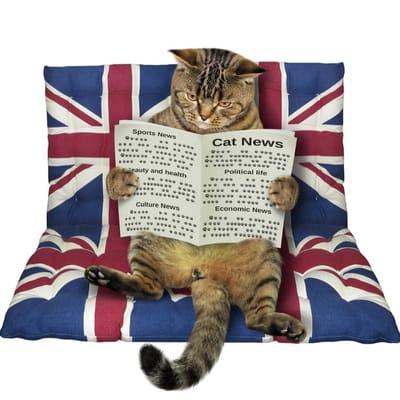 Englische Katze