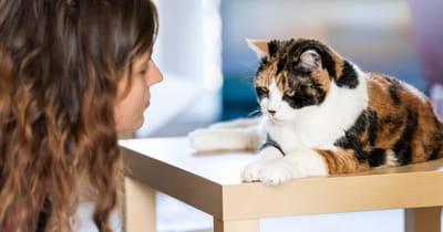 Donna rimprovera una gatta tricolore