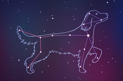 Sternenbild großer Hund am Himmel