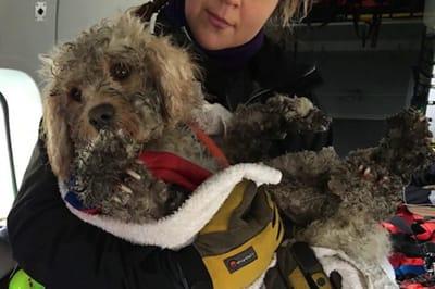 perro rescatado montaña