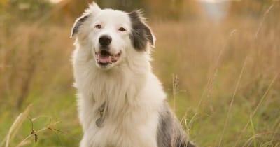 Tauber Hund in Feld