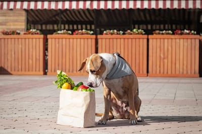 Hund mit Gemüsekorb