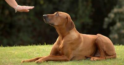 Hund macht Platz mit Handzeichen