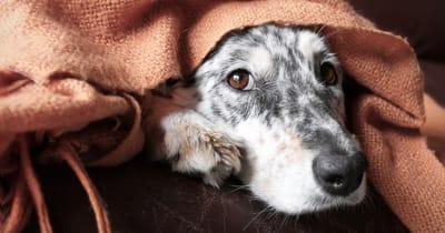 Hund erbricht braun: Kranker Hund