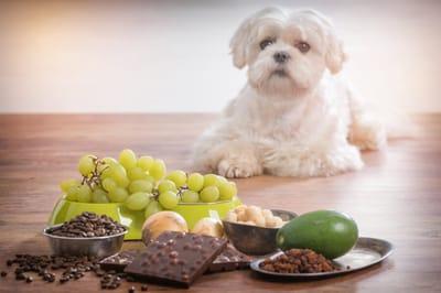 Hund und gefährliches Obst