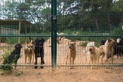 Hunde in spanischem Tierheim
