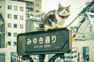 Katze auf japanischem Schild