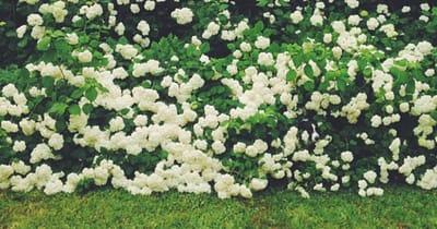 perro escondido en arbusto