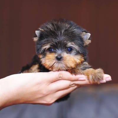 Hund in Hand