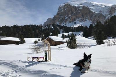 Winterurlaub Dolomiten Hund