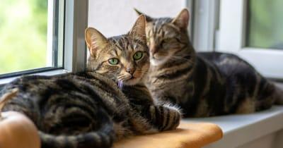 due gatti atassici a casa
