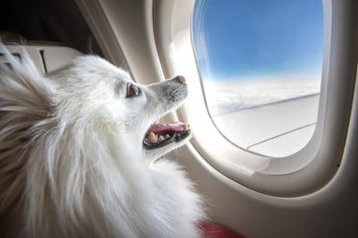 Hund schaut auf flugzeug