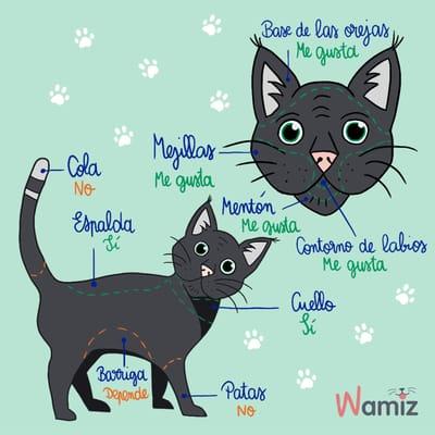 donde debes acariciar a tu gato