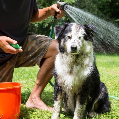 bañar perro con una manguera
