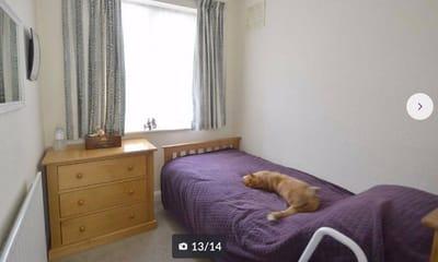 gato tumbado sobre una cama morada