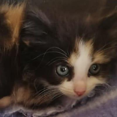 gato rescatado cementerio francia