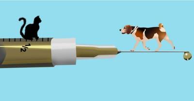 ilustracion beagle con gato
