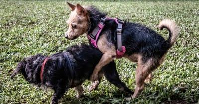 perro monta a otro perro