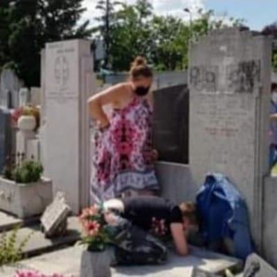 rescate gatitos cementerio francia