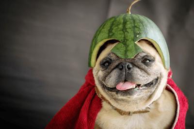 los perros pueden comer sandía  cascara