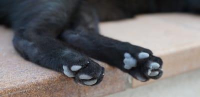 patas de un gato negro tumbado en el suelo