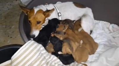 una perrita amamanta a sus cachorros