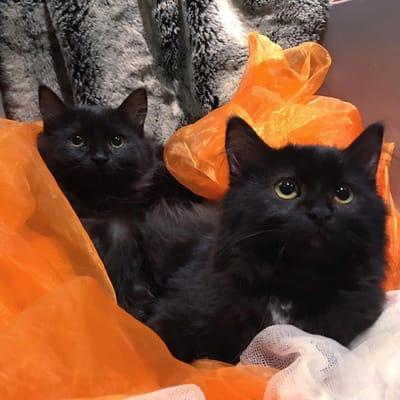 dos gatos negros sobre una tela naranja