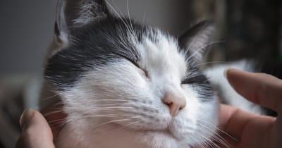 acariciar a un gato en la cara