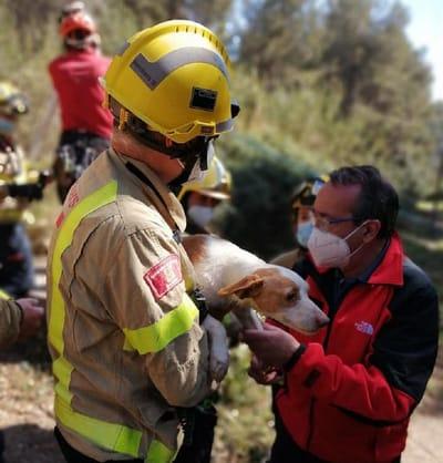 pompiere-con-uno-dei-cani-salvati