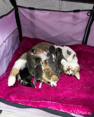 mamma gatta allatta cuccioli