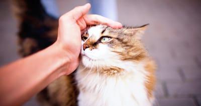 gato con su persona preferida