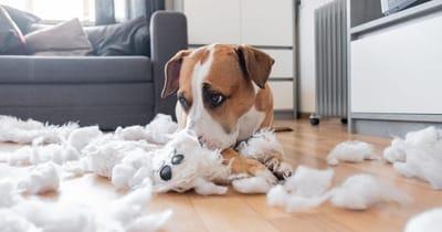 perro ansiedad por separacion sofa