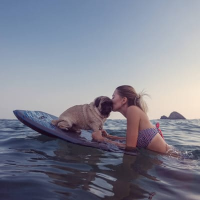 pug tabla surf playa