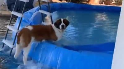 san bernardo piscina