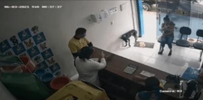 cane-randagio-entra-da-solo-dal-veterinario