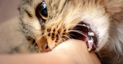gato muerde humano