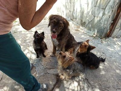varios perros esperan a que le den comida