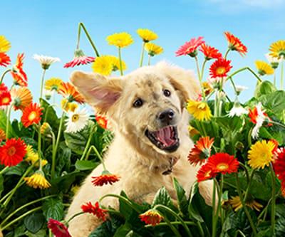 foto cachorro flores