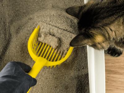 mi gato maulla al hacer popo arenero