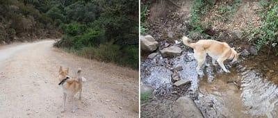 perro color canela en una ruta de senderismo