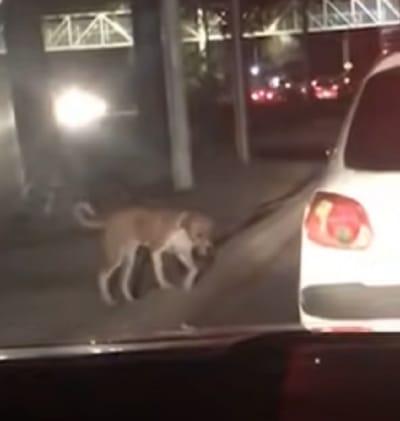 perro cerca de un coche blanco