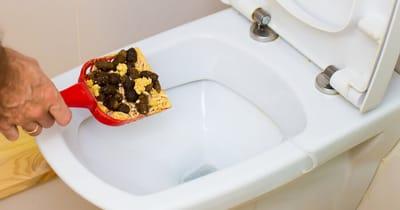 caca de gato wc