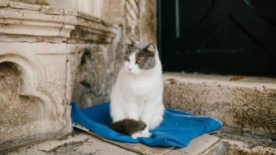 gato viejo