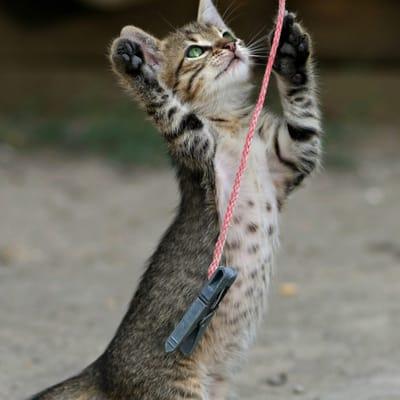gato bebe jugando